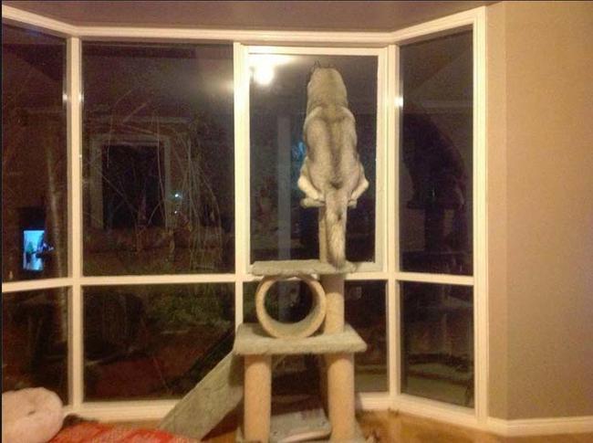 11_perros_que_se_creen_gatos