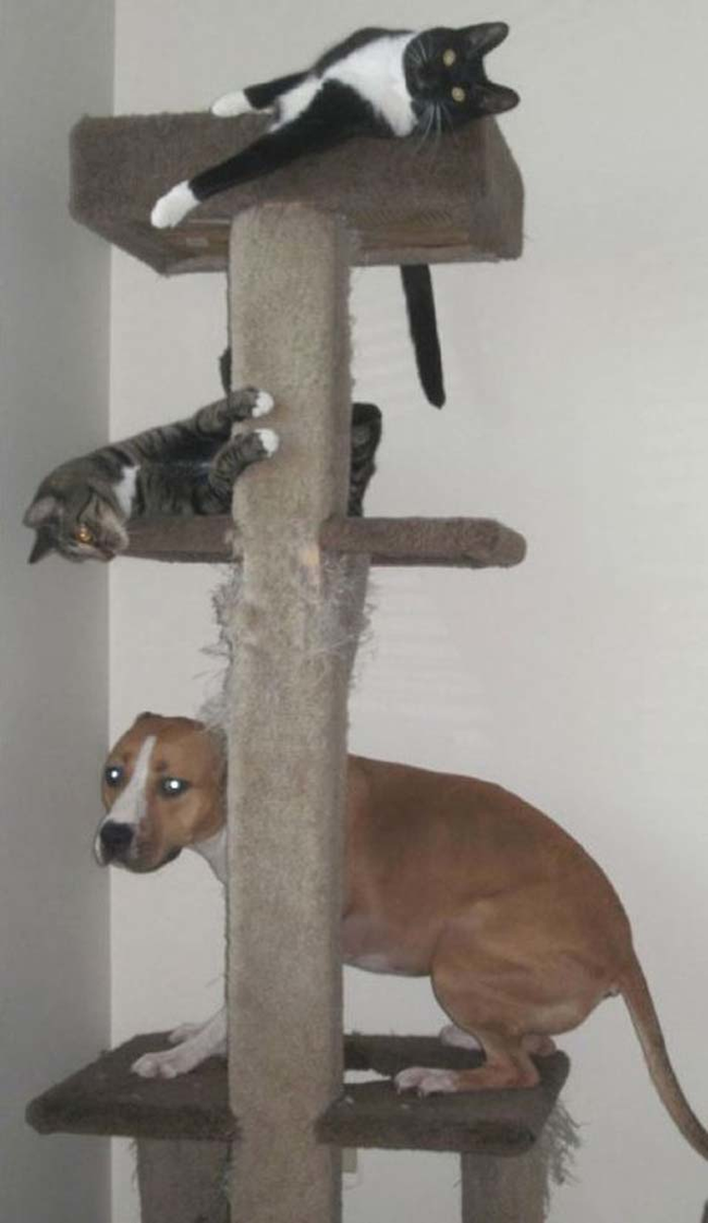 18_perros_que_se_creen_gatos