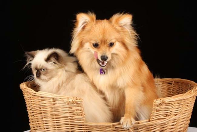 8_perros_que_se_creen_gatos