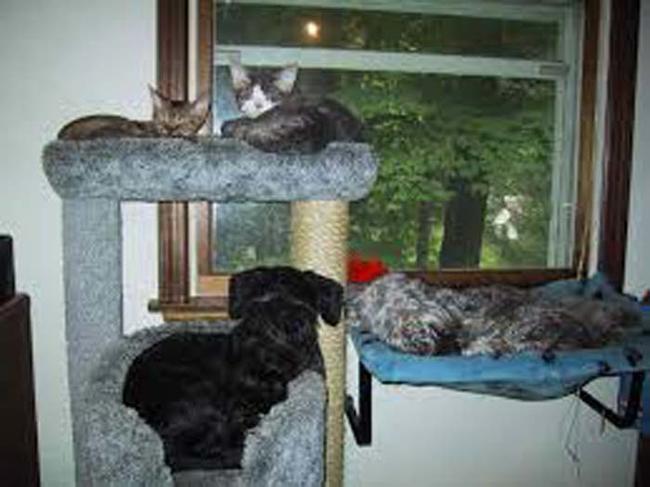 9_perros_que_se_creen_gatos