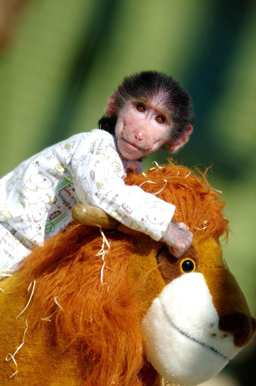 Monkey-LUKA11__880