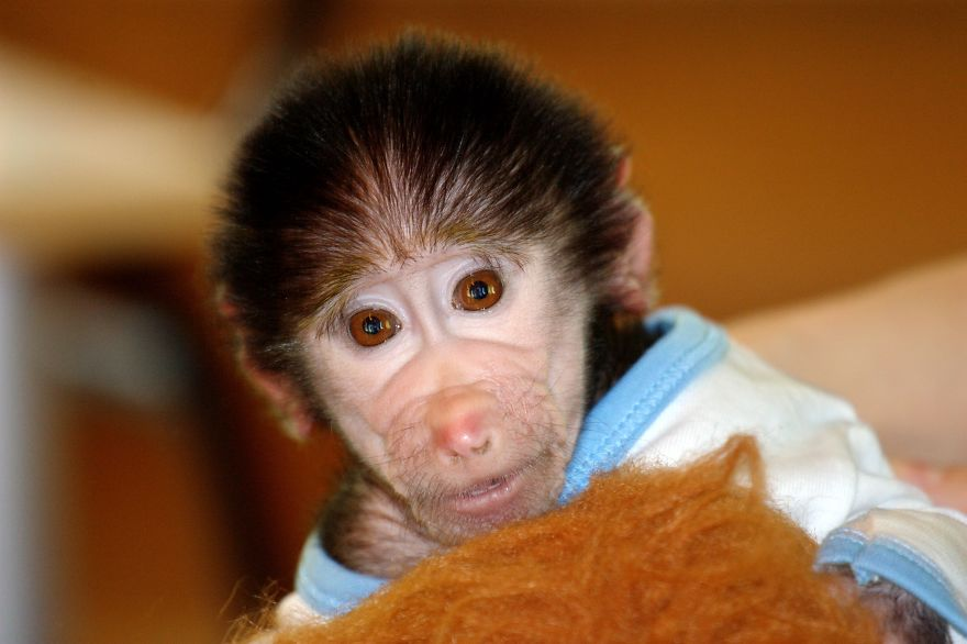 Monkey-LUKA7__880