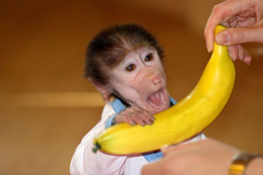 Monkey-LUKA8__880