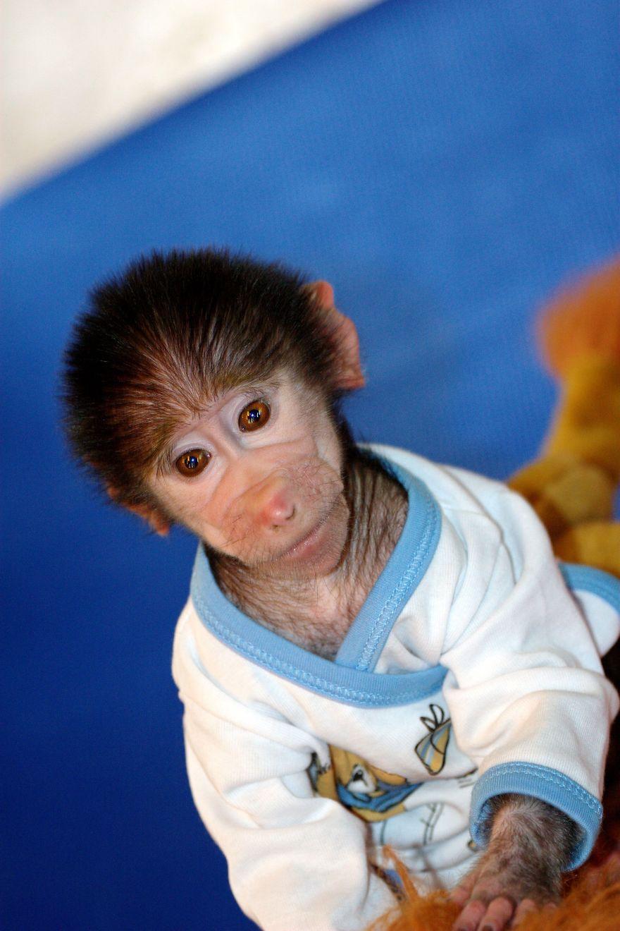 Monkey-LUKA9__880