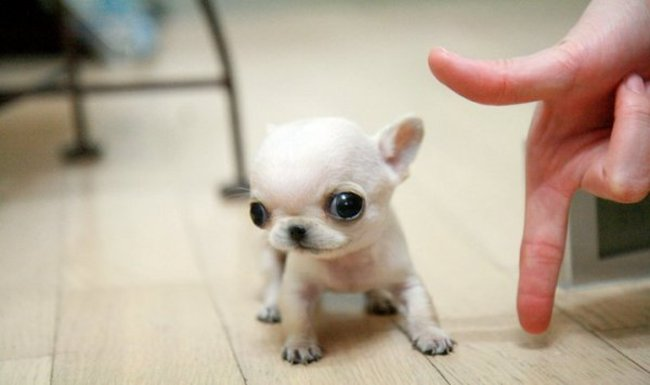 30 mini perritos llenos de ternura. ¡No te lo puedes perder!