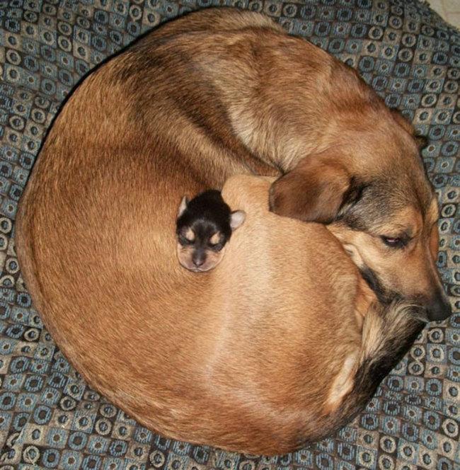 cachorritos-14