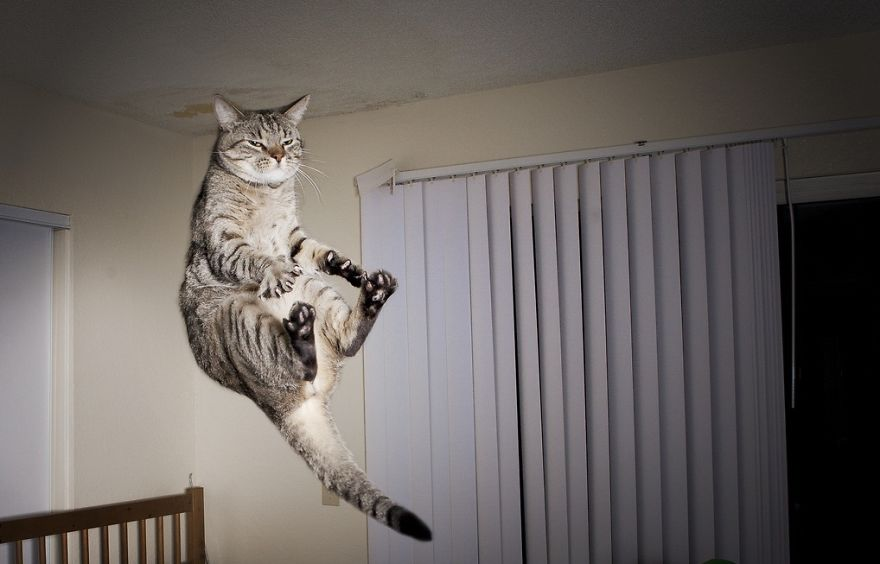 funny-jumping-cats-102__880