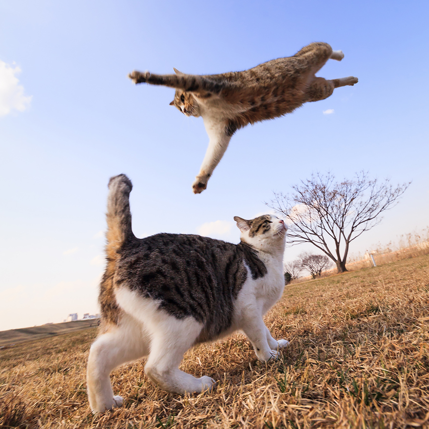 funny-jumping-cats-41__880