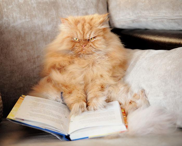 garfi-evil-grumpy-persian-cat-28__700