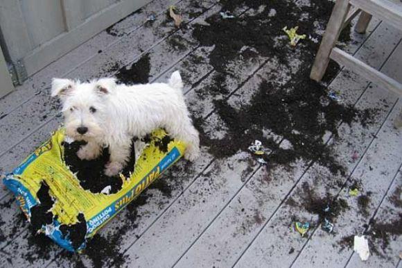 15 perros que fueron pillados con las patas en la masa - 13