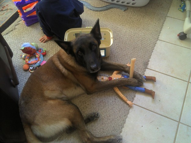 15 perros que fueron pillados con las patas en la masa - 3