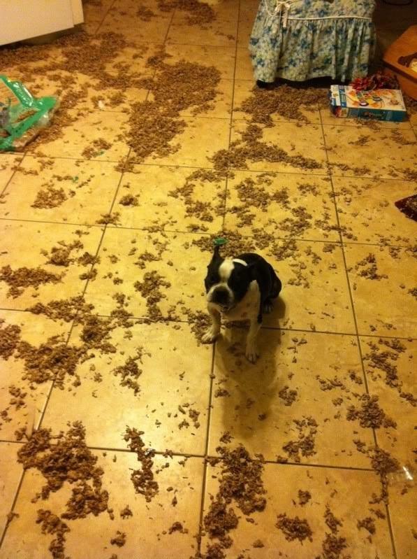 15 perros que fueron pillados con las patas en la masa - 9