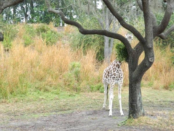17 animales expertos en camuflaje.... o eso piensan - 10
