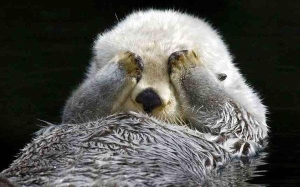 17 animales expertos en camuflaje.... o eso piensan - 12