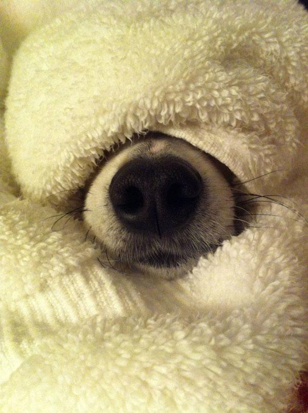 17 animales expertos en camuflaje.... o eso piensan - 8