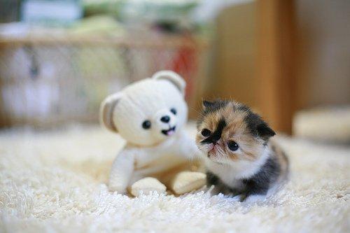 20 curiosidades sobre los gatos que te ayudarán a entenderlos mejor. - 12