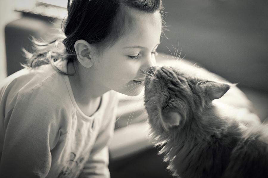 20 curiosidades sobre los gatos que te ayudarán a entenderlos mejor. - 18