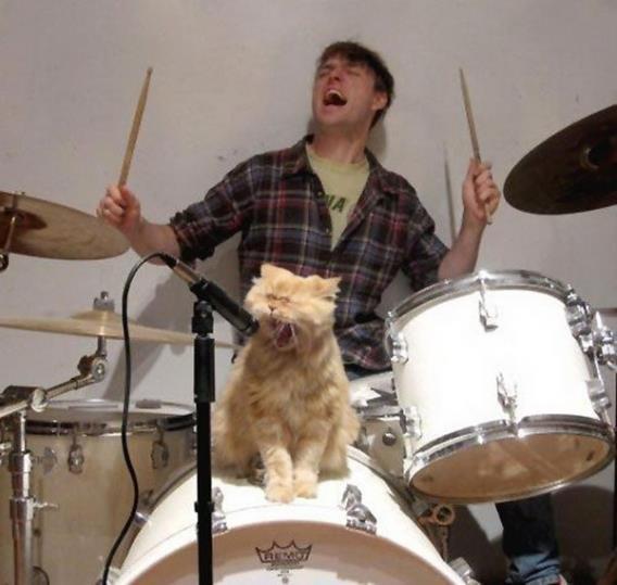 20 curiosidades sobre los gatos que te ayudarán a entenderlos mejor. - 3