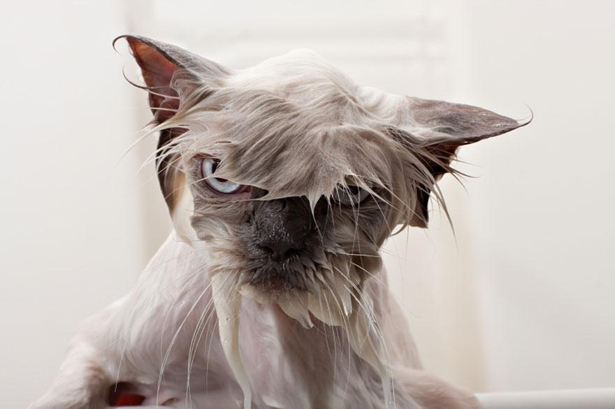 20 curiosidades sobre los gatos que te ayudarán a entenderlos mejor. - 5