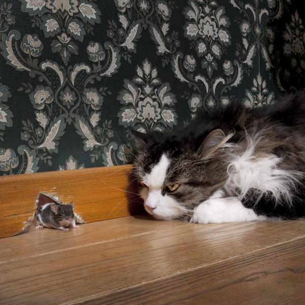 20 curiosidades sobre los gatos que te ayudarán a entenderlos mejor. - 9