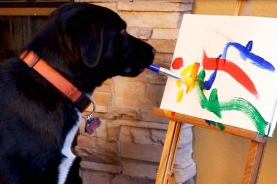 23 Perros que están viviendo el mejor momento de sus vidas. 4