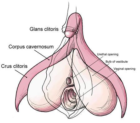 8 Cosas asombrosas sobre la vagina - 1