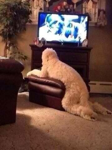 Cosas que hace tu perro cuando no estás en casa 12