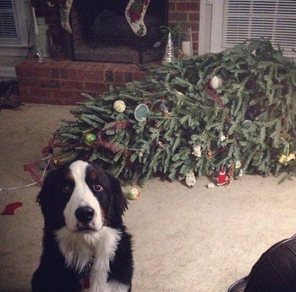 Cosas que hace tu perro cuando no estás en casa 21