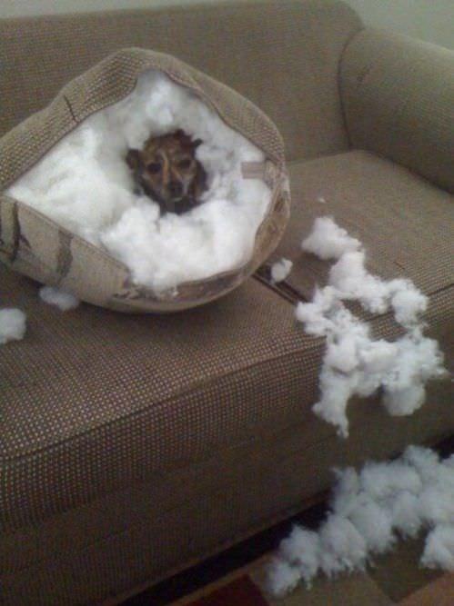 Cosas que hace tu perro cuando no estás en casa 3