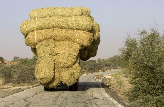 Las 30 formas más PELIGROSAS de transportar cosas... ¡A lo que puede llegar el ingenio...! - 9