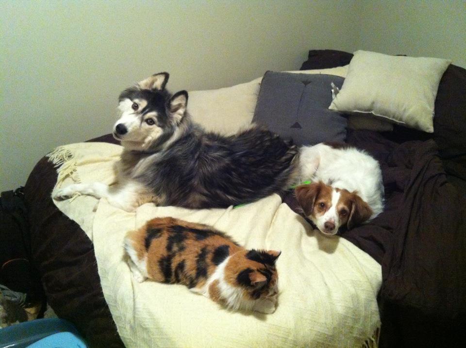 12 Mascotas que NO sienten remordimiento de haber robado tu cama. - 10