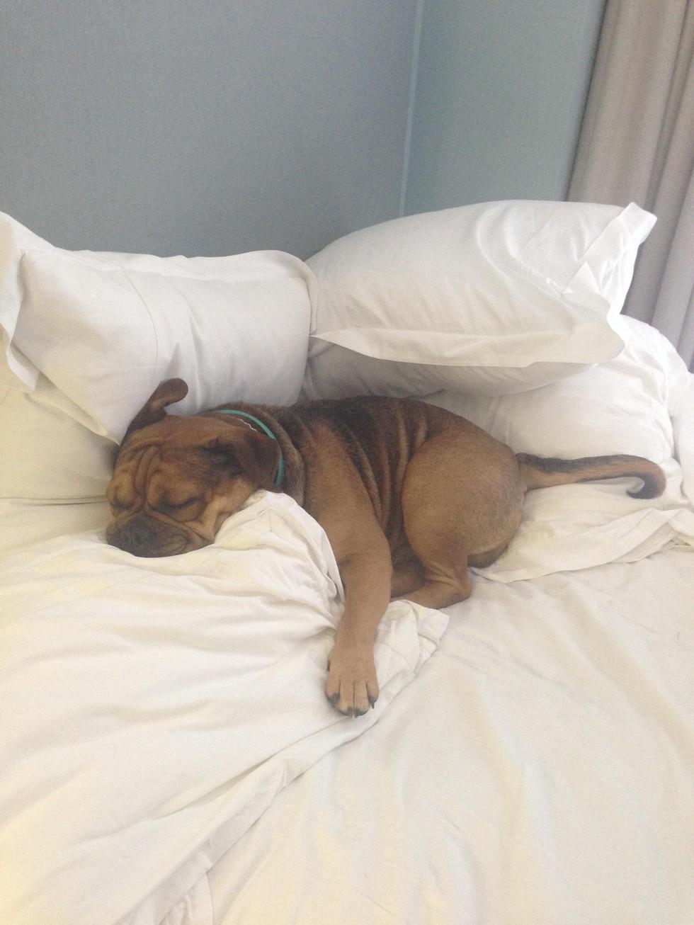 12 Mascotas que NO sienten remordimiento de haber robado tu cama. - 11