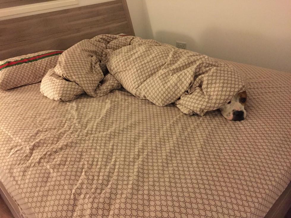 12 Mascotas que NO sienten remordimiento de haber robado tu cama. - 4