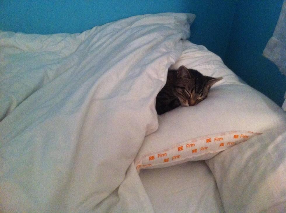 12 Mascotas que NO sienten remordimiento de haber robado tu cama. - 6