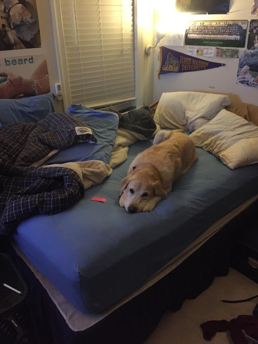 12 Mascotas que NO sienten remordimiento de haber robado tu cama. - 7