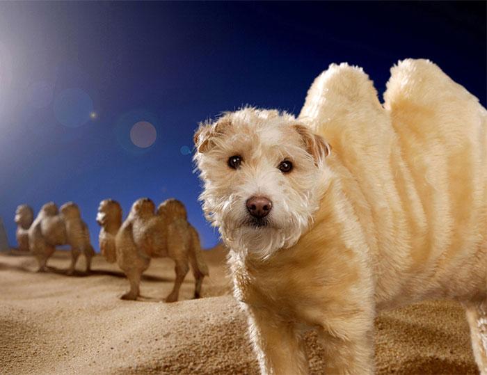 El dueño de este perro lo ha convertido en un Perro modelo muy particular.... 1