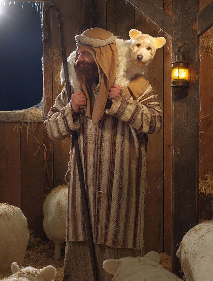 El dueño de este perro lo ha convertido en un Perro modelo muy particular.... 4