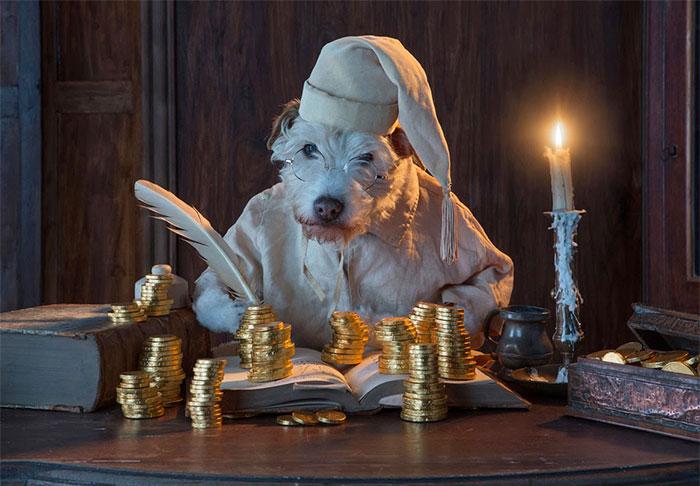 El dueño de este perro lo ha convertido en un Perro modelo muy particular.... 6