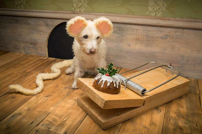 El dueño de este perro lo ha convertido en un Perro modelo muy particular.... 8