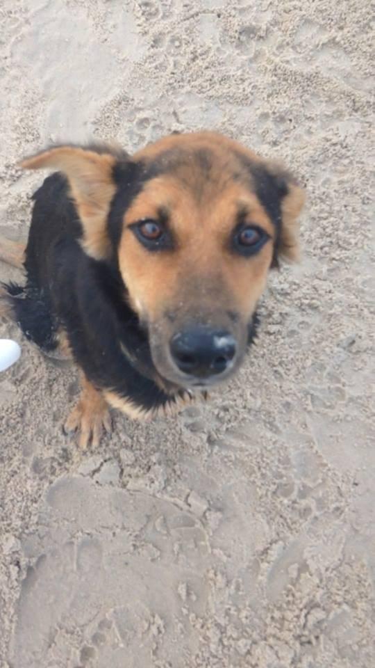 La conmovedora historia de Leo, el perrito paralítico encontrado en una playa de Tailandia - 3