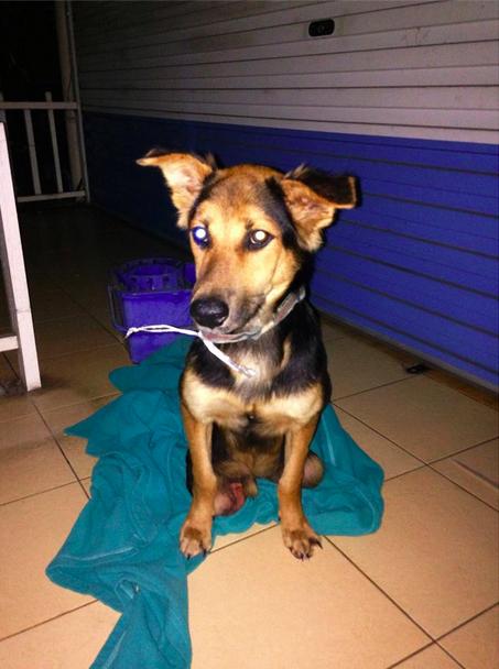 La conmovedora historia de Leo, el perrito paralítico encontrado en una playa de Tailandia - 5