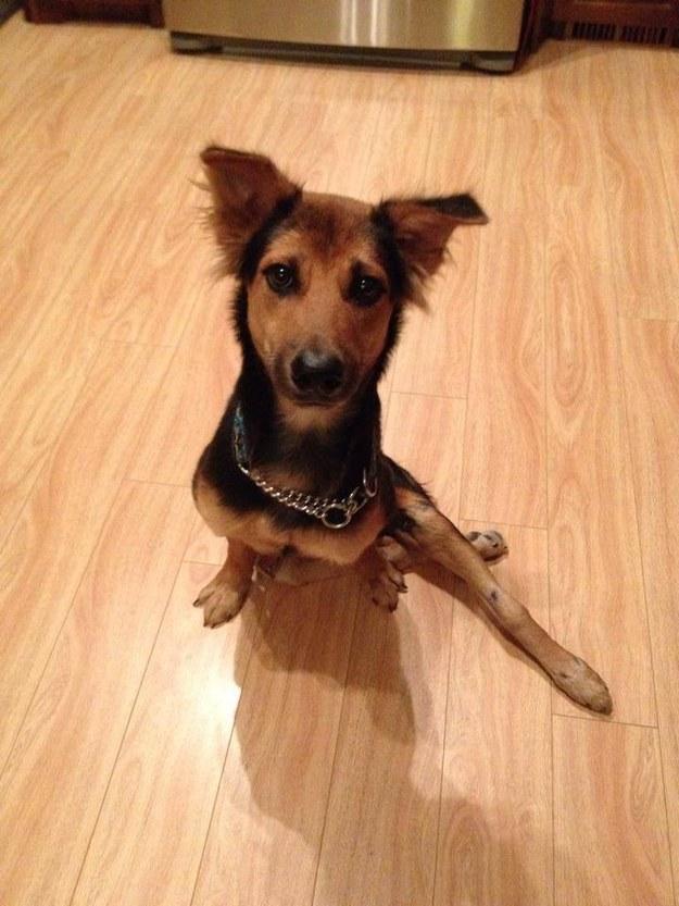 La conmovedora historia de Leo, el perrito paralítico encontrado en una playa de Tailandia - 8