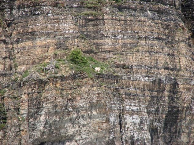 Lugares completamente reales donde nunca pensarías que una cabra pudiera llegar a subirse 14