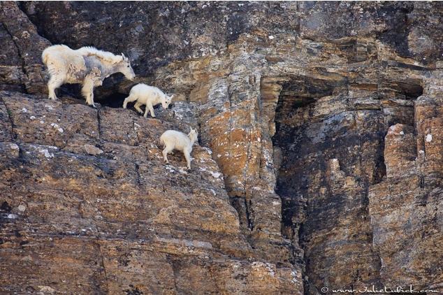 Lugares completamente reales donde nunca pensarías que una cabra pudiera llegar a subirse 15
